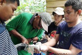 BKSDA Maluku data tumbuhan dan satwa liar