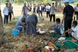 Polres Malra salurkan hewan kurban ke masjid