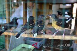Pertamina ajak siswa mengenal satwa burung kasturi