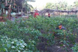 Tidore Kepulauan perlu Perda hasil pertanian
