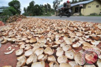 Harga kopra di Ambon terus bergerak turun