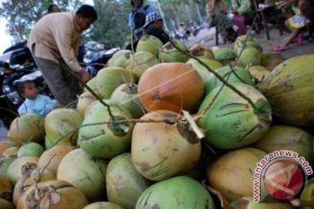 Meningkatkan Pendapatan Petani Kelapa di Maluku Utara - Oleh La  Ode Aminuddin
