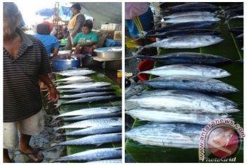 Harga ikan cakalang di Ambon naik