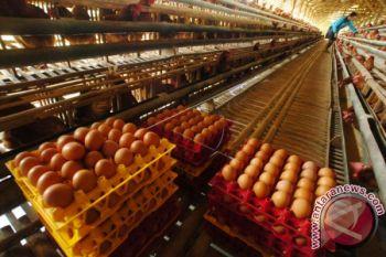 Disperindag jamin stok telur di Masohi