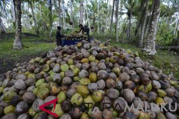 Pemkab diminta larang pengiriman bibit kelapa bido
