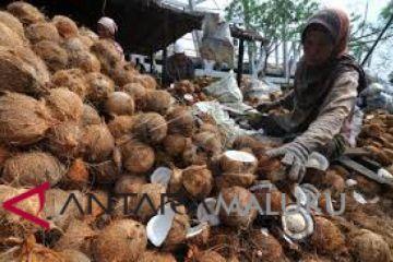 Harga kopra di Ambon mulai bergerak naik