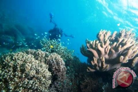 Pemkot maksimalkan pengembangan wisata bawah laut