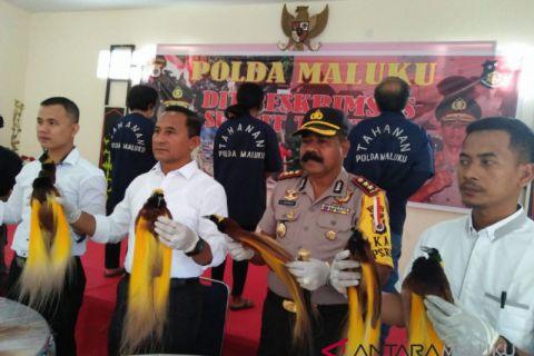 Polda Maluku limpahkan berkas perkara penjualan cendrawasih