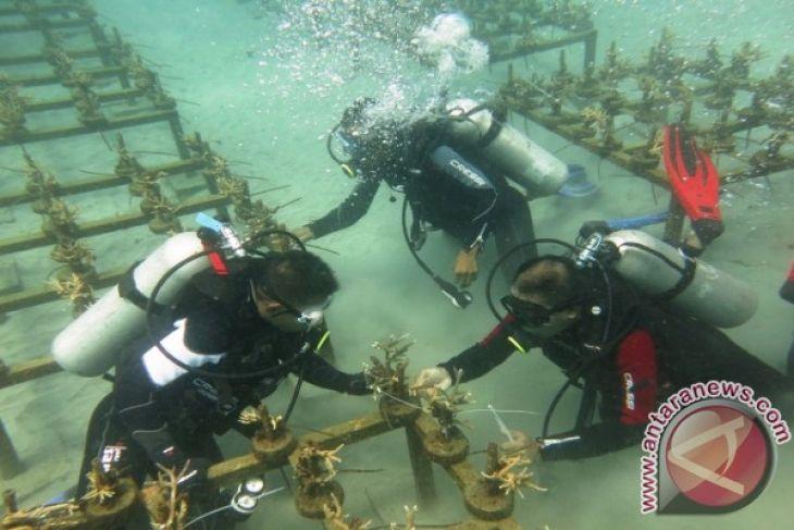 Ahli: karang buatan solusi rehabilitasi terumbu karang