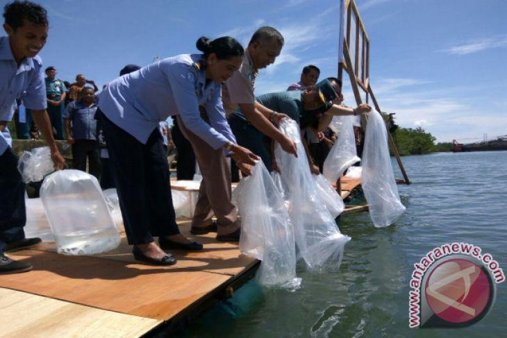 10.000 Benih Ikan Ditebar di Teluk Ambon