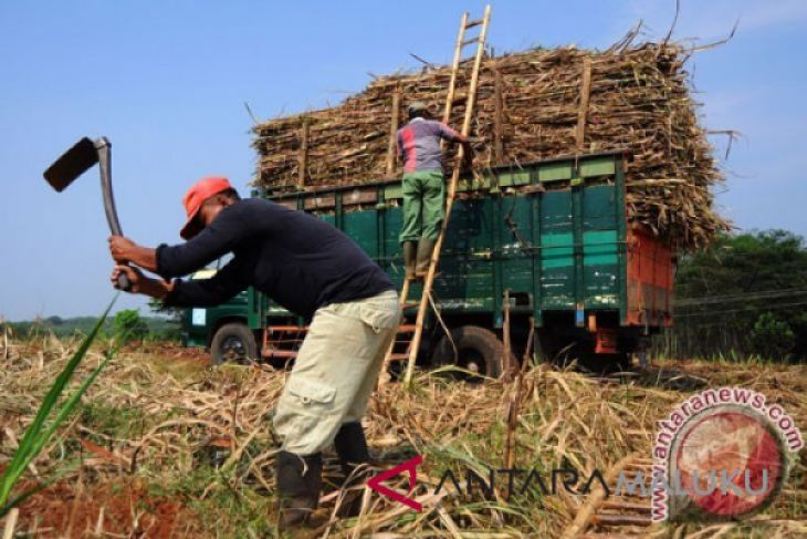 Maluku Utara pangkas rantai distribusi pangan