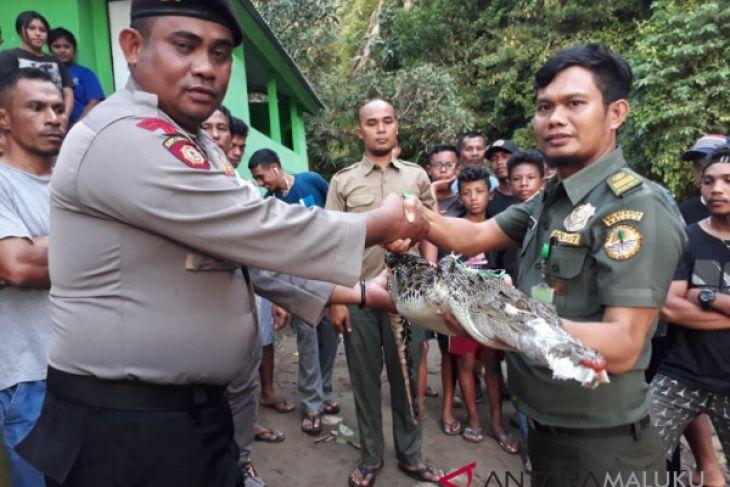 Polisi serahkan anak buaya kepada BKSDA Maluku