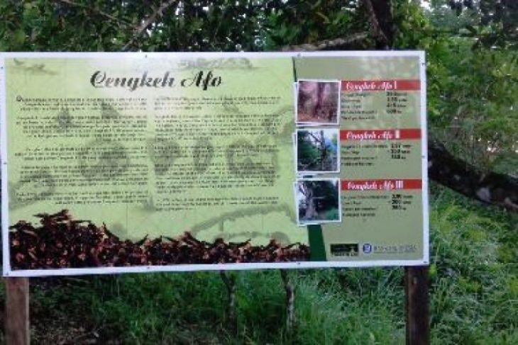 Objek wisata Cengkih Afo semakin diminati wisatawan