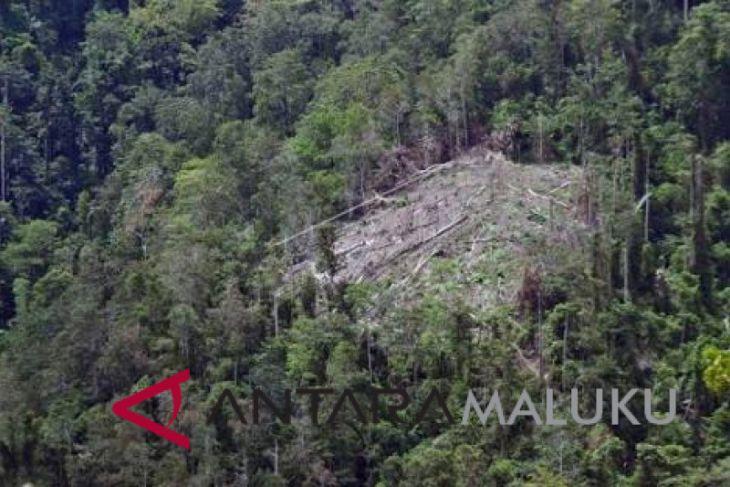 Pemprov Maluku belum miliki Perda hutan adat
