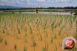 Petani Bangka Diminta Manfaatkan Benih Padi Bantuan