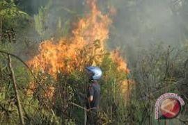 BPBD Bangka Tengah larang warga bakar lahan