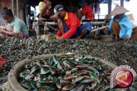 Nelayan Babel Mencari Kerang Untuk Penghasilan Tambahan