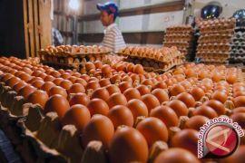 Harga Telur Ayam di Pangkalpinang Berangsur Turun