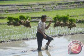 Indonesia butuh tanah sehat untuk lumbung pangan