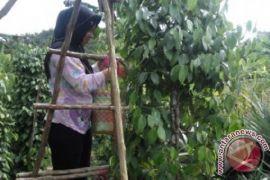 Bupati Bangka Tengah minta petani lada berinovasi
