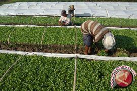 Komite Kretek minta pemerintah perhatikan petani tembakau