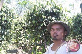Pemkab Bangka Tengah bantu pasarkan lada petani