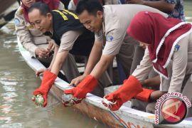 Ribuan Kepiting Hasil Pencegahan Penyeludupan Dilepasliarkan