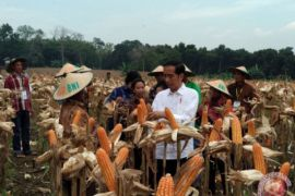 Presiden panen jagung dan tanam jati