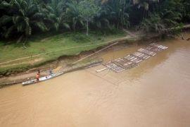 (Foto) OTT illegal logging