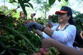 Menteri BUMN dukung peningkatan kesejahteraan petani kopi