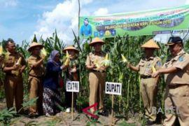 Petani Bangka Tengah diminta budidayakan tanaman obat