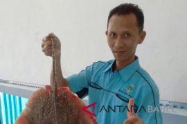 Produksi ikan nelayan Sungailiat 485.760 ton