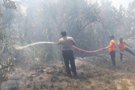 Hutan bakau di Bangka Tengah terbakar