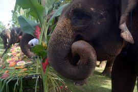 Hari Gajah Sedunia