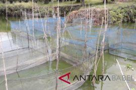 Kelompok Senawar Lestari manfaatkan lahan bekas tambang