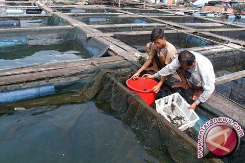 KKP dorong daerah tonjolkan keunggulan perikanan