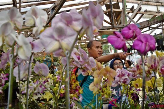 Peningkatan Ekspor Florikultura