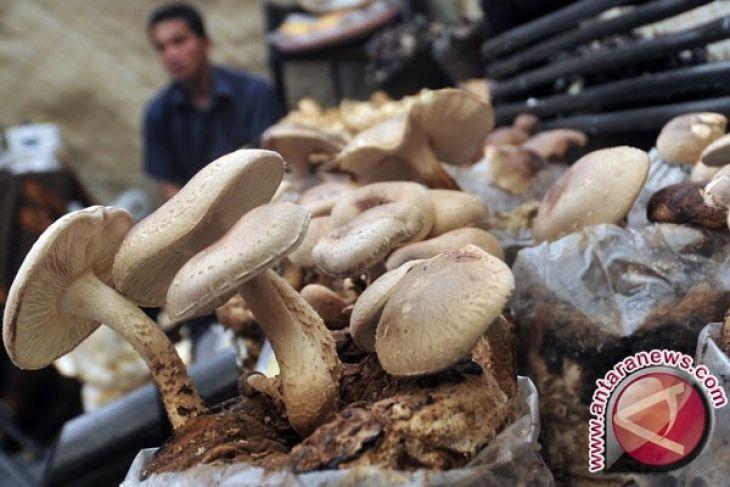 Sarapan Jamur Bantu Hindari Konsumsi Kalori Berlebihan