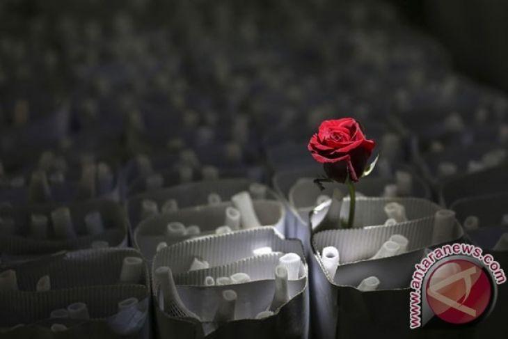 Mawar, Wewangian Favorit Perempuan Indonesia