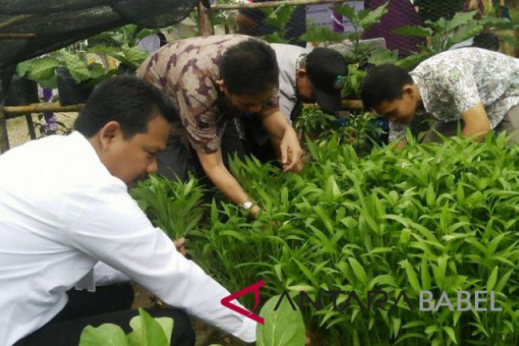 BI panen perdana holtikultura di Belitung Timur