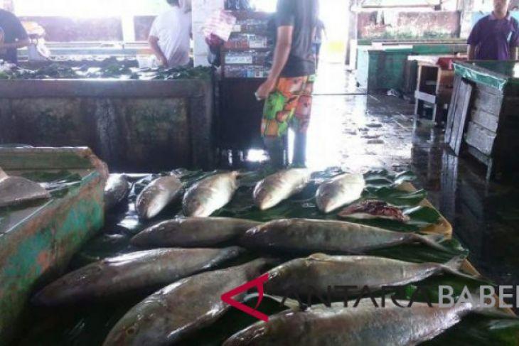 Nilai penjualan ikan nelayan Sungailiat capai Rp7 miliar