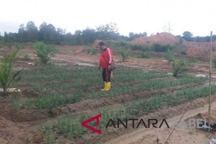 Pemprov Bangka Belitung kembangkan bawang merah guna menekan angka inflasi