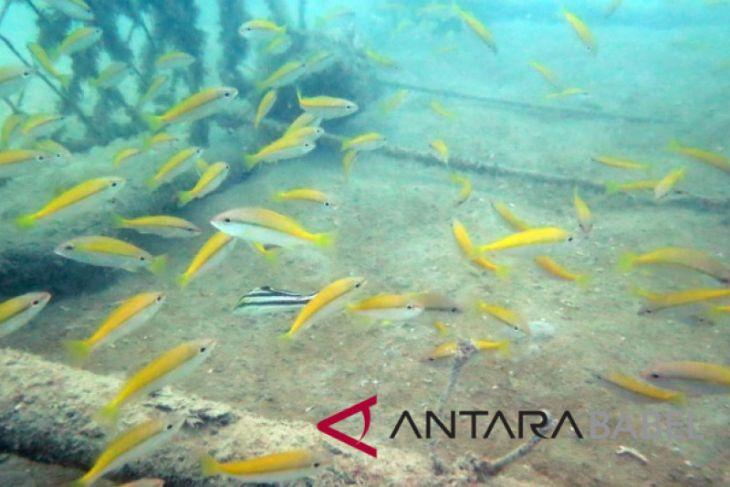 Ikan hias padati