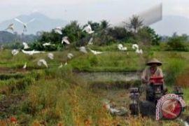 Pengamat: peningkatan produksi tidak disertai kesejahteraan petani