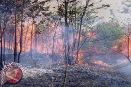Polhut Bali Temukan Titik Api Kebakaran Hutan