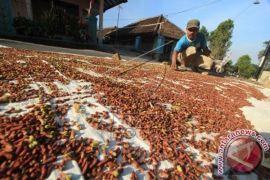 Distan Imbau Petani Cengkeh Perhatikan Sistem Petik