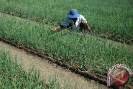 Tekan impor dan inflasi, BI kembangkan 211 klaster pertanian