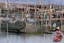DPKP Denpasar kembangbiakkan ikan gabus