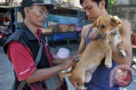 92.000 hewan penular rabies di Badung divaksinasi pada 2018