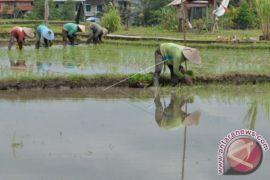 Badung upayakan proteksi sektor pertanian